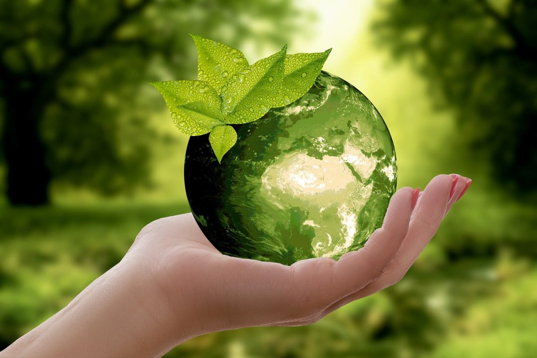 A hand holding a green globe with some leaves on the top