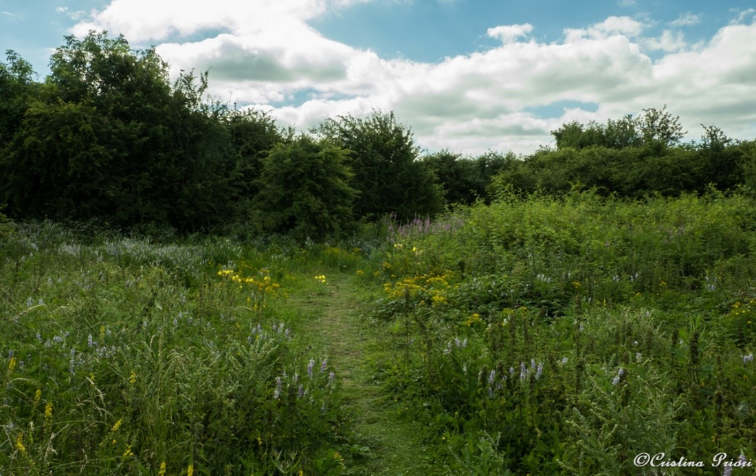 Flowers are in full blooming at Eastcourt Meadow (Riverside Country Park)