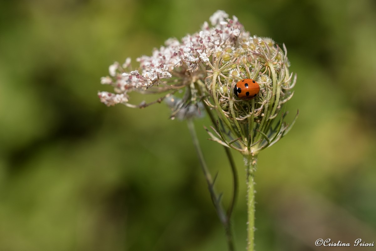 Ladybird at Riverside Country Park