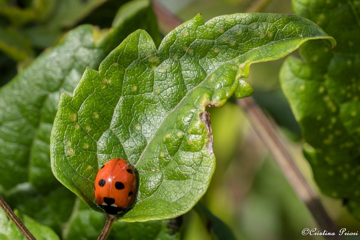 Ladybird at Darland Banks