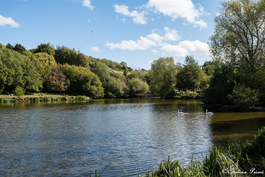 The lake at Capstone Farm Country Park: Autumn colours start to appear